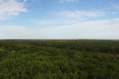St. Croix State Park Lookout